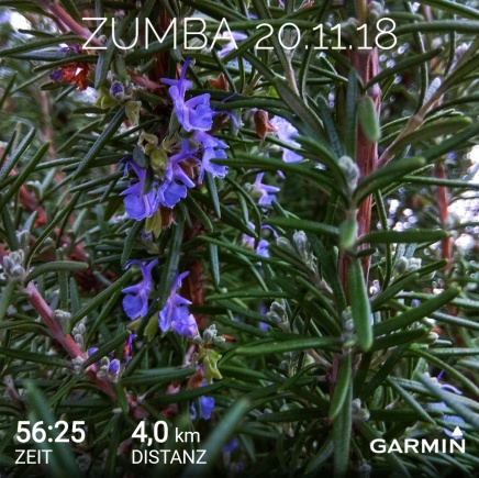GarminConnect_20181120-210509-01.jpeg